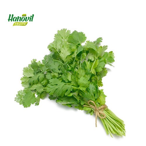 Image for product: CORIANDER-BENCH