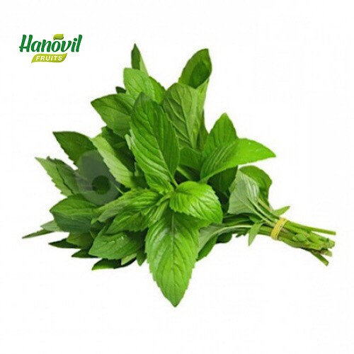 Image for product: BASIL  -BENCH 100g