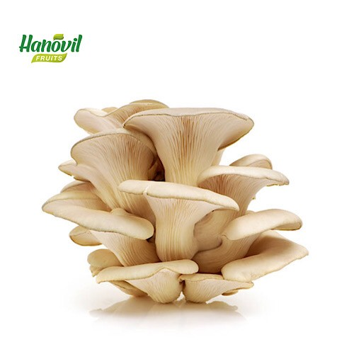 Image for product: MUSHROOM OYSTER -PACKET 250g
