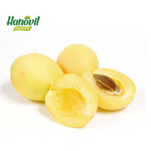 Image for product: APRICOT AGAMIE